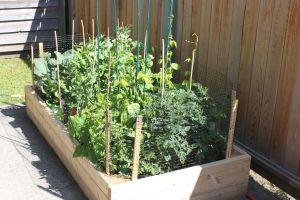 garden grow
