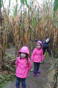 wet corn maze